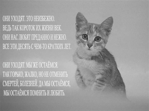Как унять горе после гибели кота?