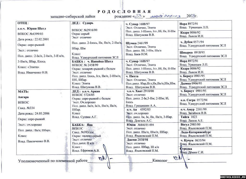 Западно-сибирская лайка собака. описание, особенности, уход и цена породы | sobakagav.ru