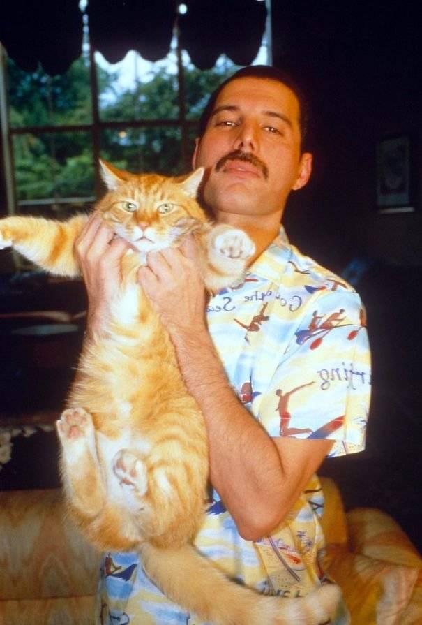 Имена и клички котов известных российских людей, коты и кошки леннона