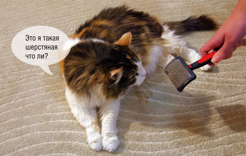Сильная линька у кошки: как уменьшить - статья