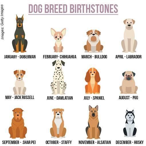 Как выбрать собаку — правила выбора подходящей породы
