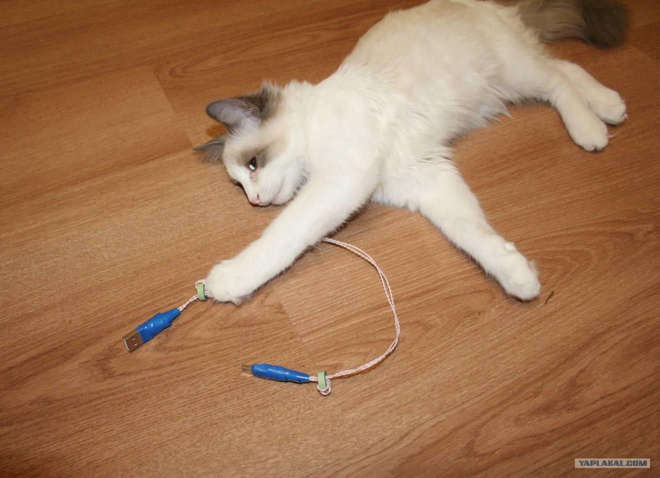Как отучить котенка грызть провода — уход и воспитание