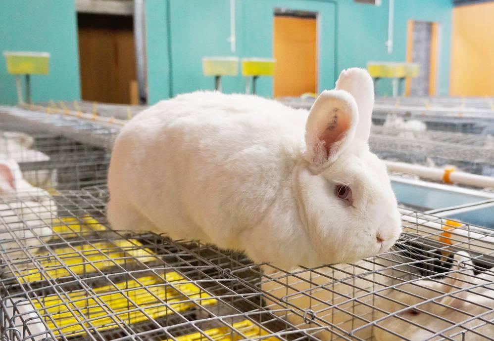 Эффективное разведение кроликов как бизнес | cельхозпортал