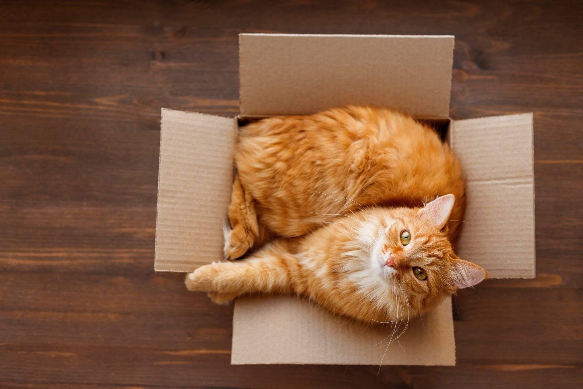 Как приучить кошку к новому дому: подготовка, чего нельзя делать
