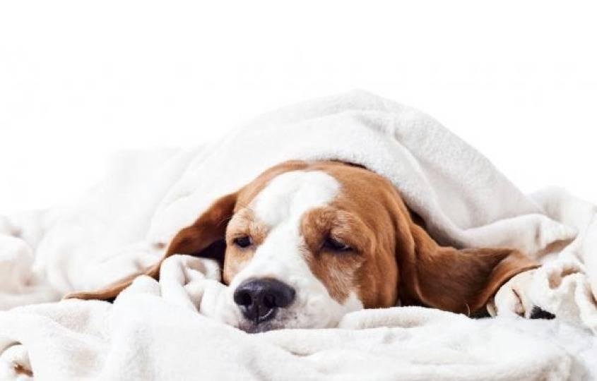 Энтерит у собак: симптомы, лечение, профилактика   forza10