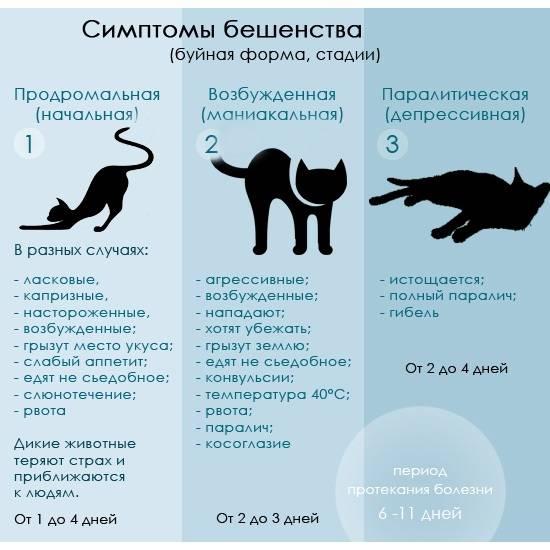 Ложная беременность у кошек - причины, симптомы и признаки, лечение