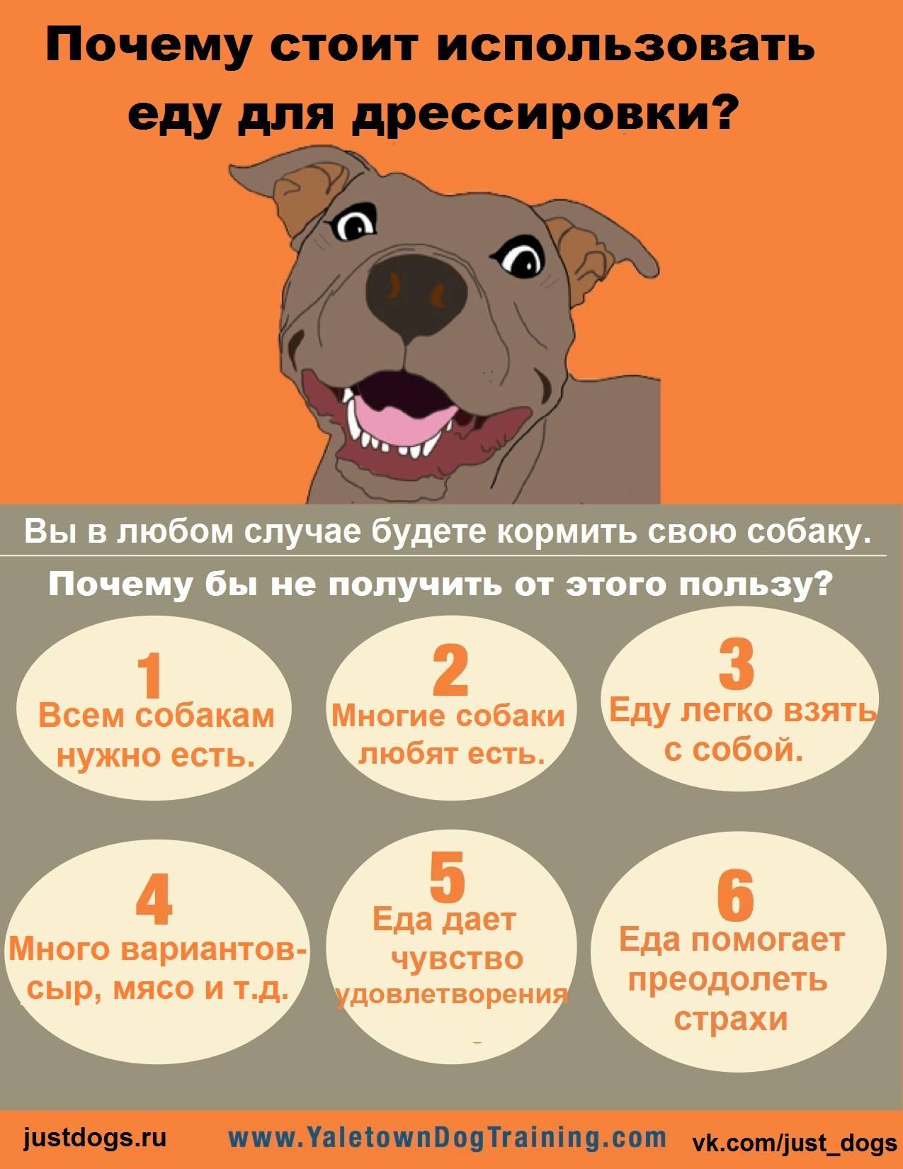Уход за щенком: основы содержания для начинающего хозяина собаки
