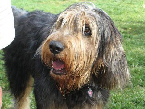 Гончие собаки топ-15: породы с фото, названиями и описанием