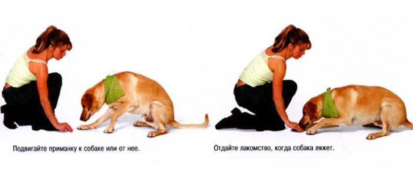 Команды для собак: как научить основным командам в домашних условиях