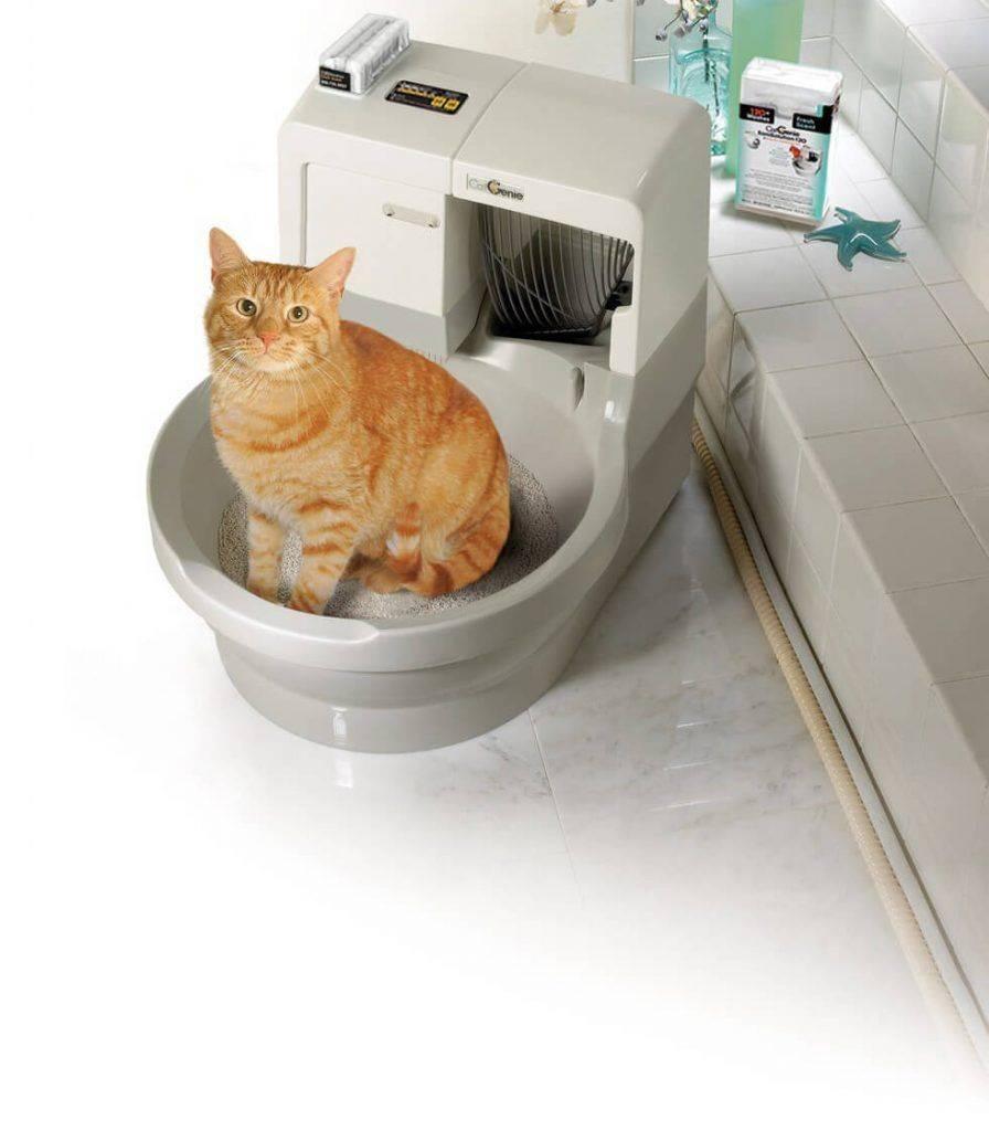 Как приучить котенка к туалету? – правильно к лотку и унитазу