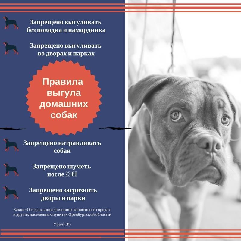 Мвд утвердило список потенциально опасных пород собак на 2019 год