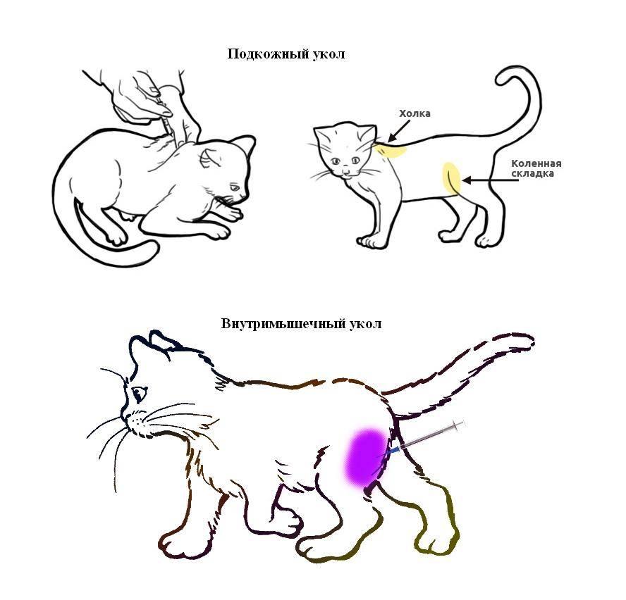 Как правильно делать укол кошке