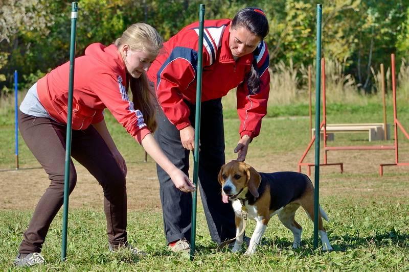 Общий курс дрессировки (окд) для собак — что туда входит