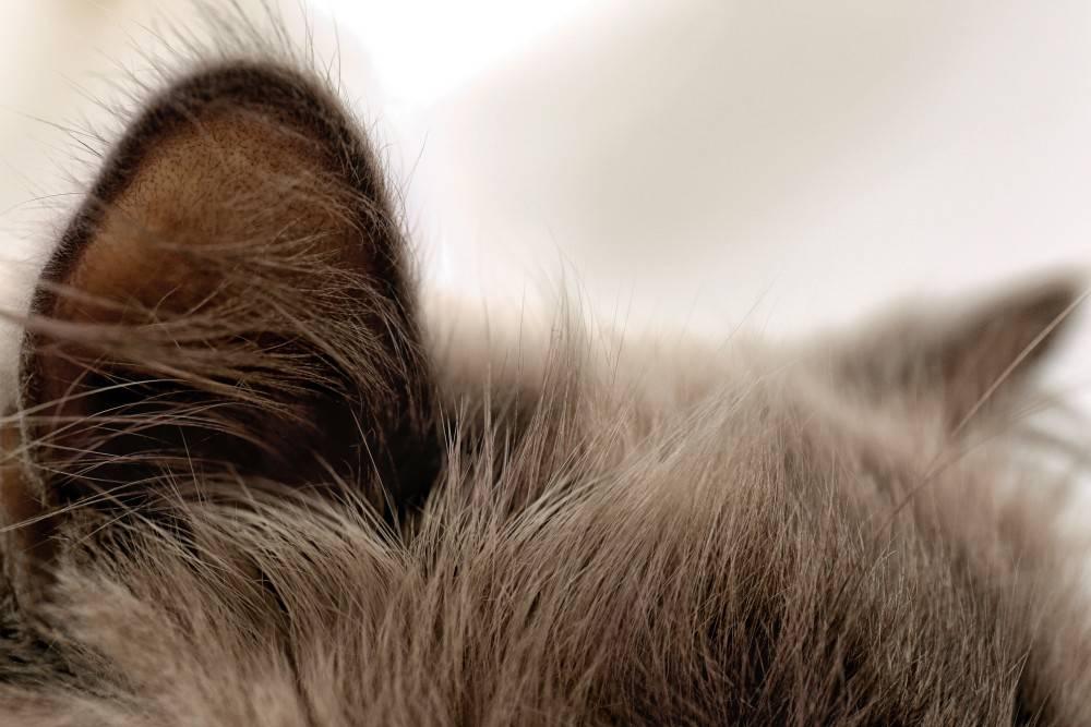 Изоспороз у кошек - симптомы, лечение в ветклинике зоостатус