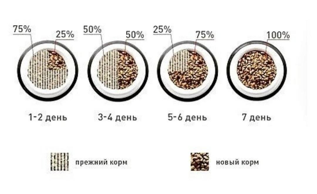 Перейти с натурального корма на сухой несложно, как правильно перевести животное, чтобы перевод с натуралки на сухой корм был безболезненным