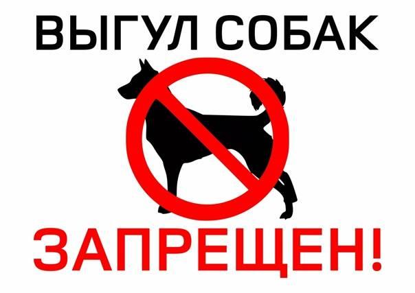 Топ 8 самых опасных собак в мире, с которыми лучше не связываться