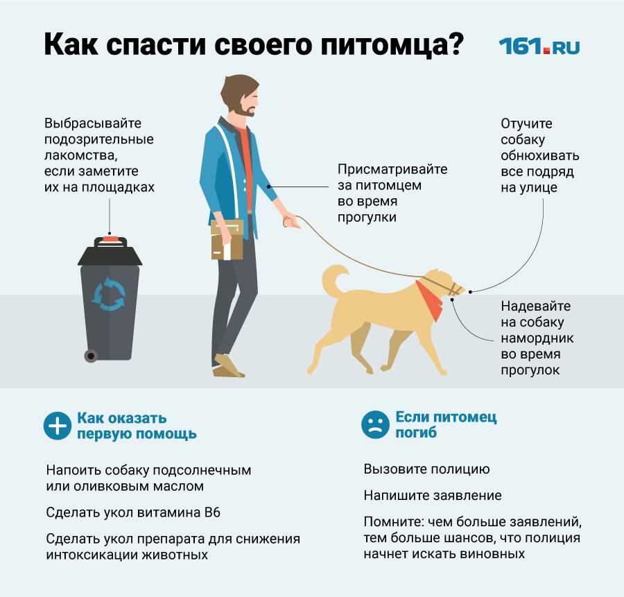 Как помочь животным в жару