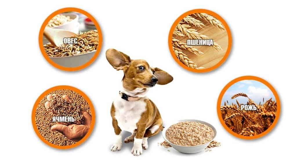 Какие крупы можно готовить собаке