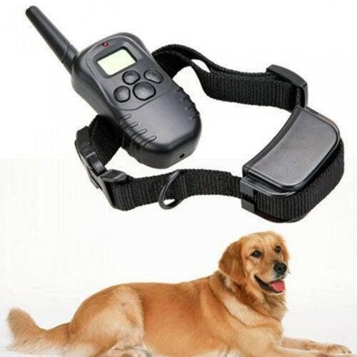 Ошейники для собаки: какие бывают и какой выбрать