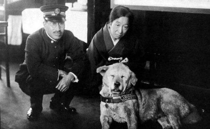 Редкие исторические фотографии хатико и история самой верной собаки в мире
