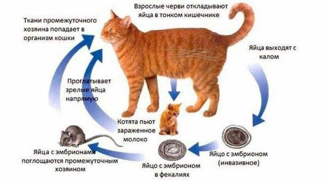 Как понять, что кошка рожает: признаки