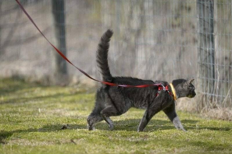 10 необычных методов отучить кошку от улицы