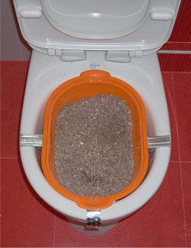 Как приучить кота или кошку к унитазу после лотка, научить котенка ходить в туалет в квартире, можно ли сделать это за 1 день