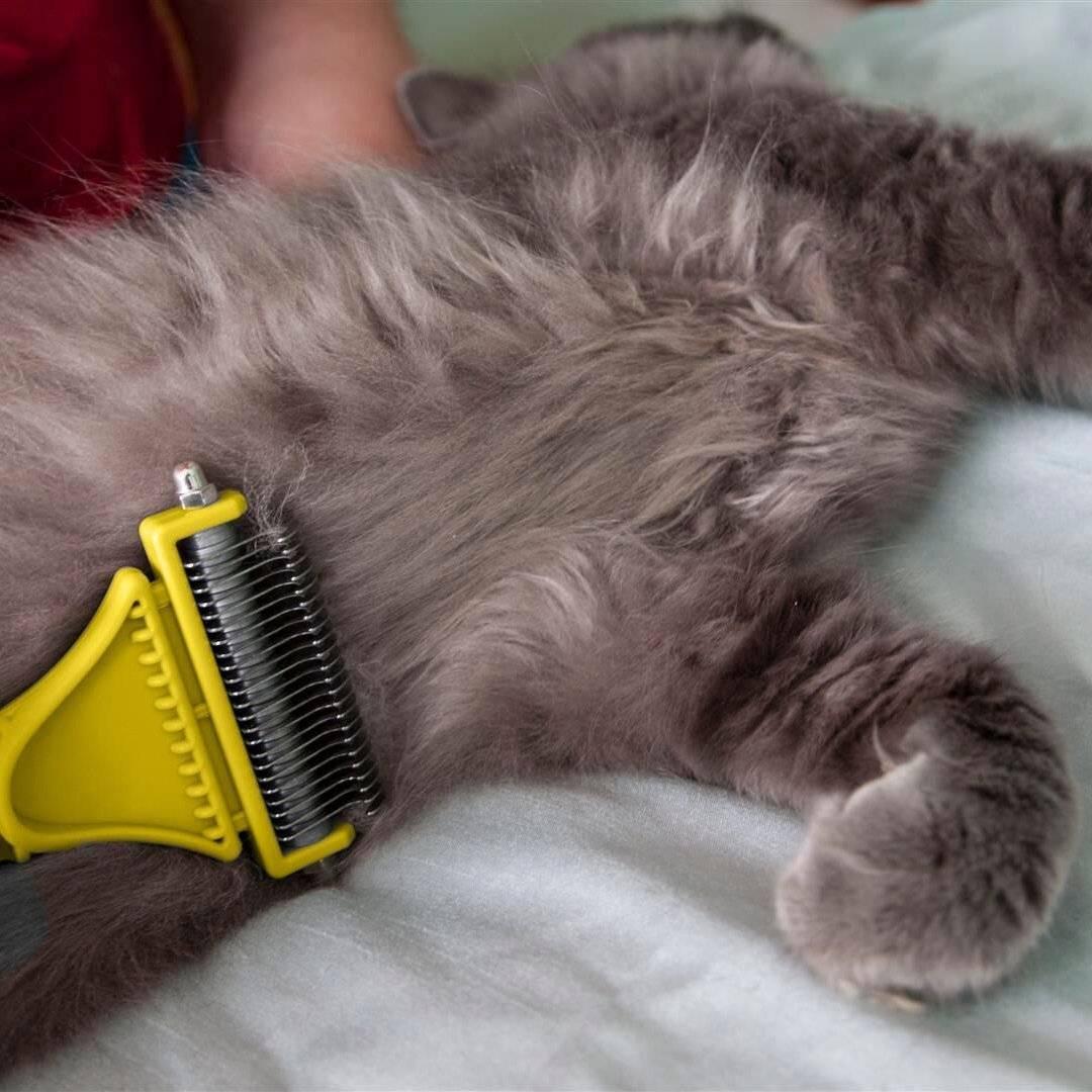 Что такое колтунорез для кошек и как им пользоваться