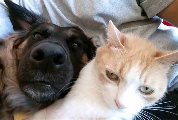Почему кошки и собаки не понимают друг друга? в чем состоит &quotязыковой барьер&quot?