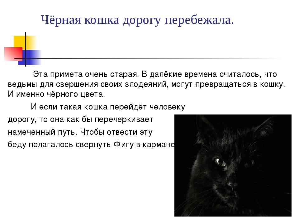 Кошка в доме: приметы и суеверия, народные поверья, к чему приходит в дом