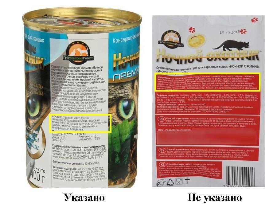 Какой корм для кошек лучше: правильный рацион пушистого питомца