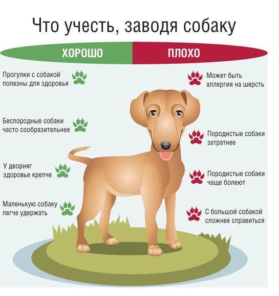 До какого возраста растут собаки | мелких, средних, больших пород, до скольки