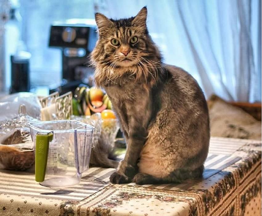Как отучить кота драть мебель и обои: рекомендации по перевоспитанию, другие методы: стрижка когтей, накладки-антицарапки и другие хитрости