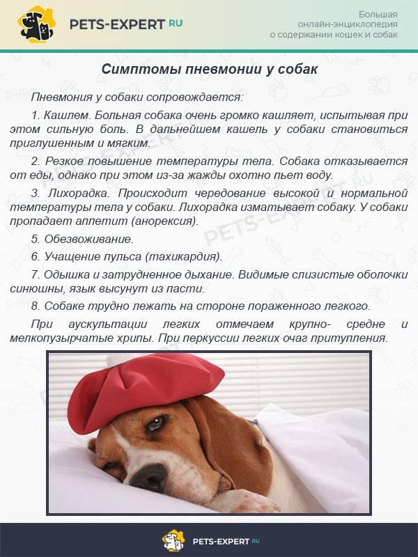 Что означает если собака грустит и неактивна