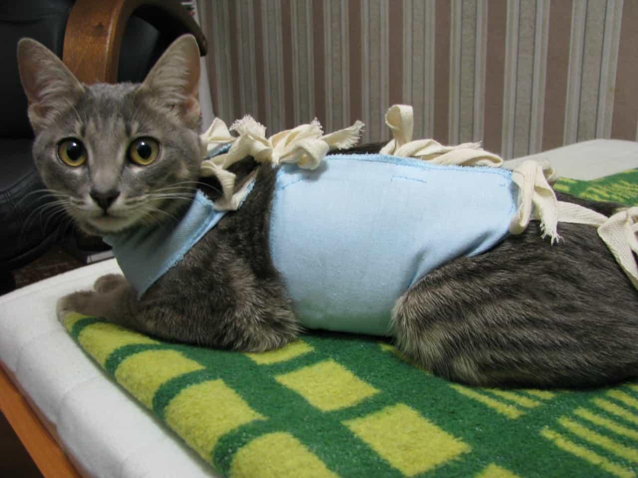 Круглосуточная ветеринарная клиника в подольске. сколько живут кошки и как продлить жизнь кошке