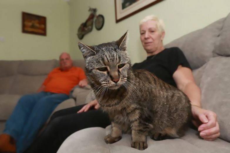 Самые старые в мире домашние кот и кошка: от чего зависит срок жизни питомца, как его продлить, рейтинг животных - долгожителей, фото