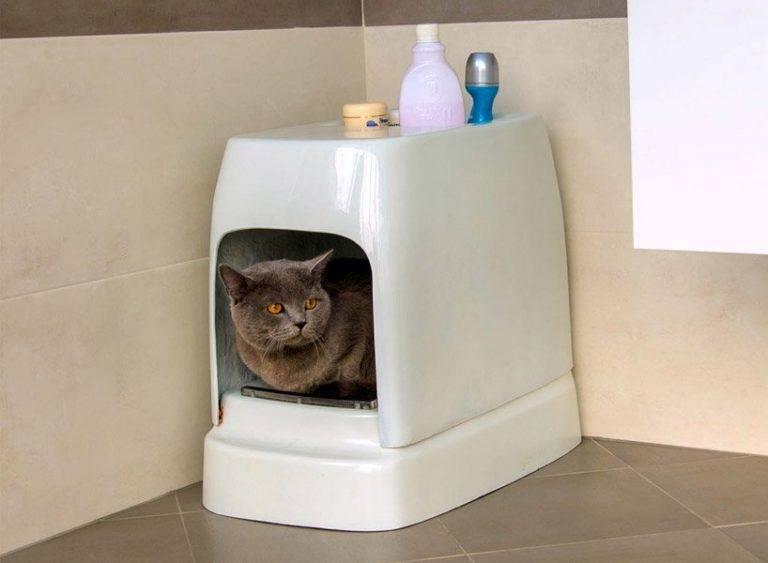 Как выбрать закрытый лоток для кота