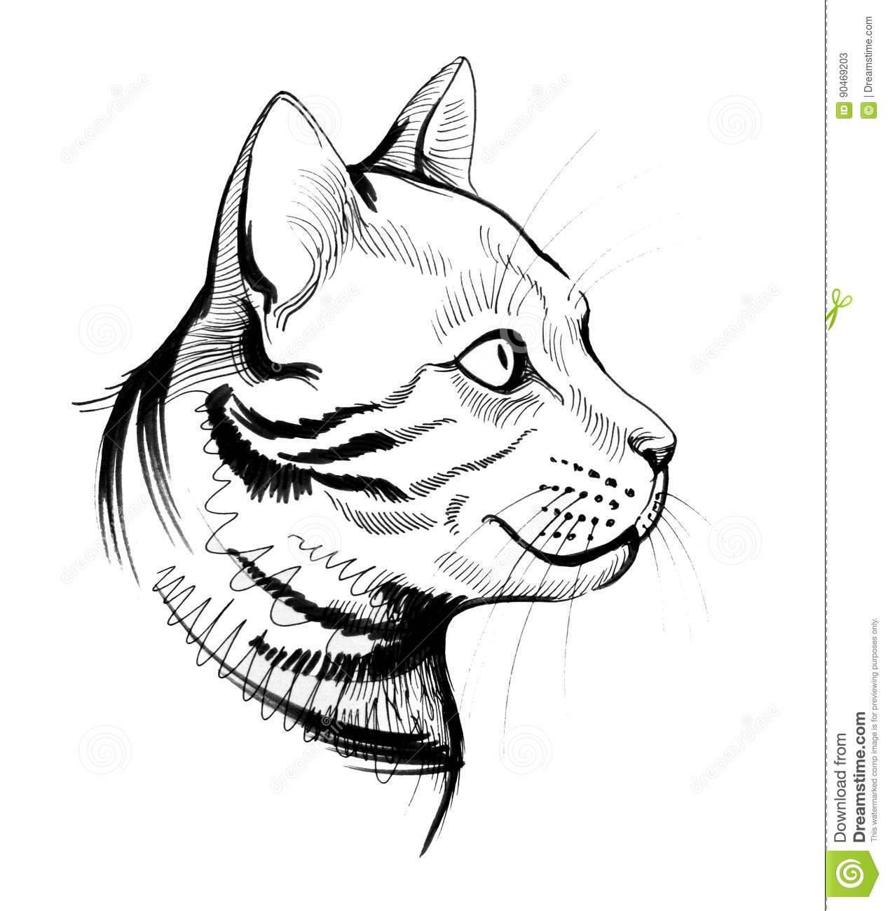Милые картинки котиков для срисовки :3 большая коллекция