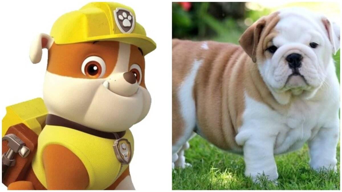 """Как зовут всех щенков из мультфильма """"щенячий патруль""""?"""