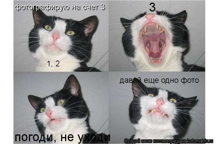 Что делать, если раздражает кошка?