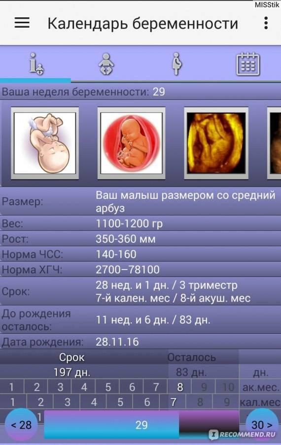 Беременность кошки:  уход за беременной кошкой, калькулятор