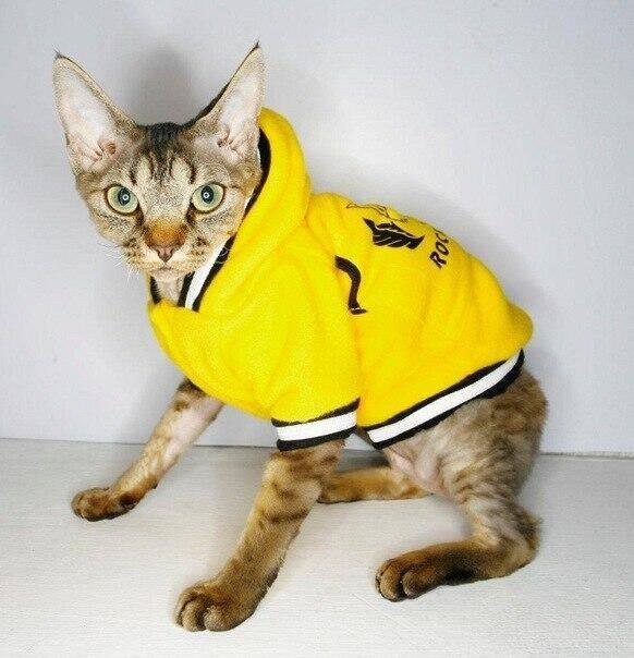 Особенности выбора и пошива одежды для котов