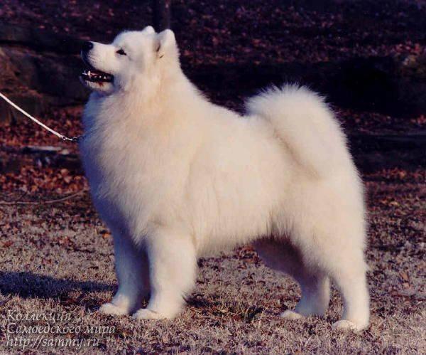 Лысые собаки: перечень пород и их история и особенности- обзор +видео