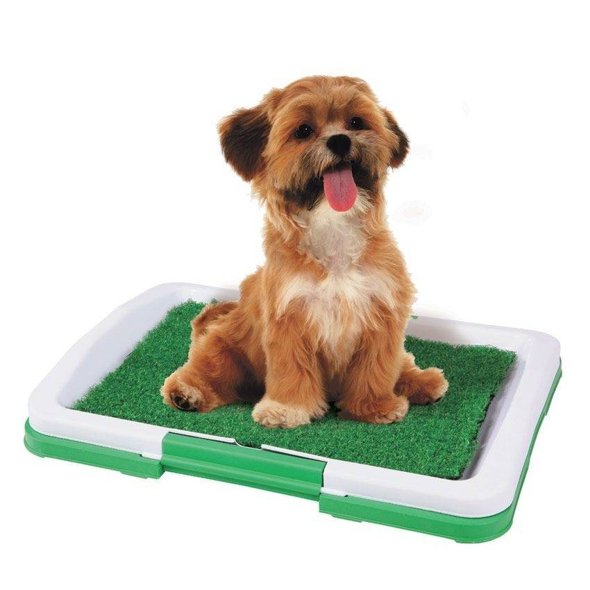 10 лучших туалетов для собак