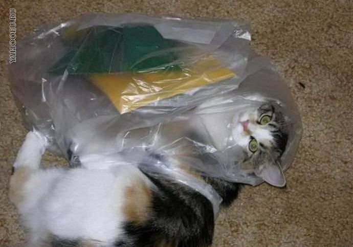 Поедание несъедобных предметов (аллотриофагия) котами и кошками