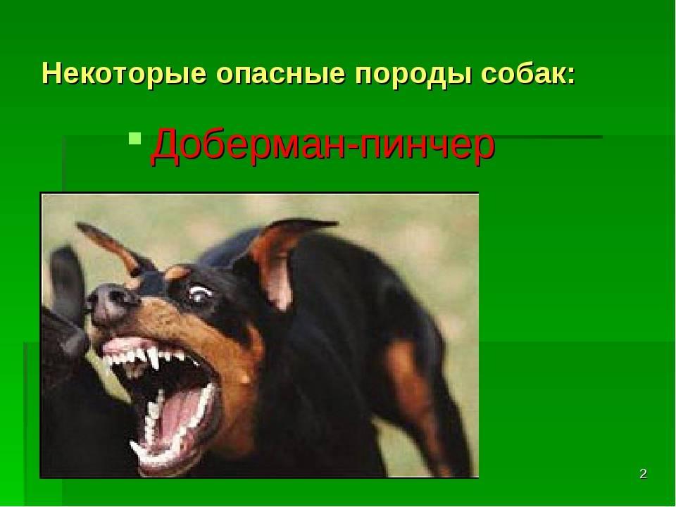 Перечень потенциально опасных собак: постановление правительства рф №974 от 29.07.2019 года