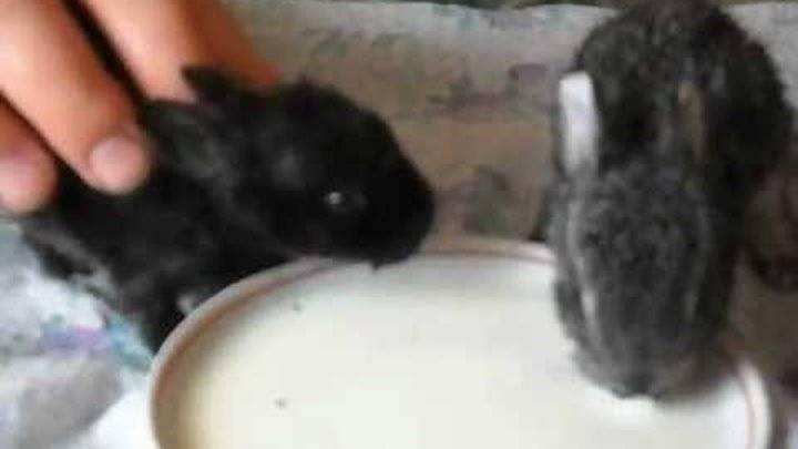 ✅ почему крольчихи съедают своих крольчат: причины, что делать если едят детенышей - tehnomir32.ru