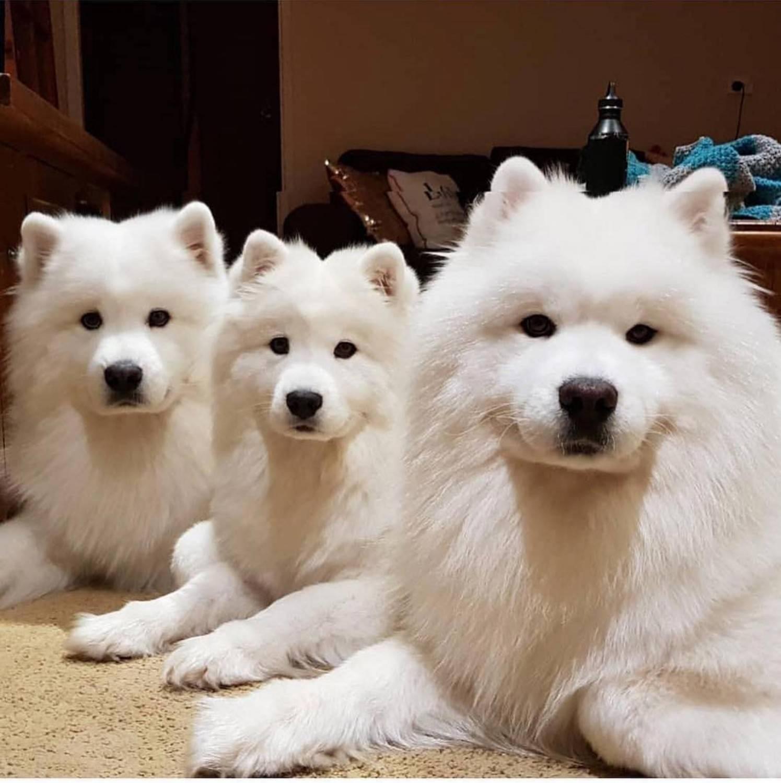 Японские породы собак: фото, краткая характеристика, особенности