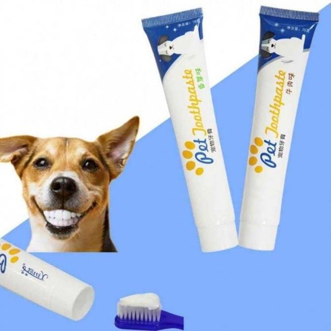 Зубной камень у собак: от чего появляется, удаление, профилактика.