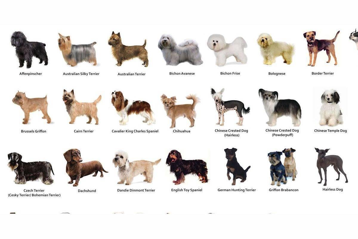 Описание русских собак с фотографиями и названиями: какие породы, выведенные в россии, известны?